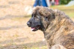 Grand plan rapproché de chien Photos libres de droits