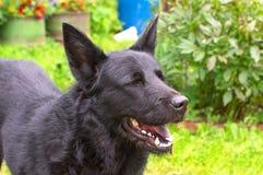 Grand plan rapproché de chien Image stock