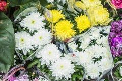 Grand plan rapproché jaune et blanc frais de chrysanthème Images stock