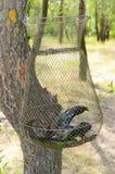 Grand poisson-chat dans la grille Loquet frais photo stock