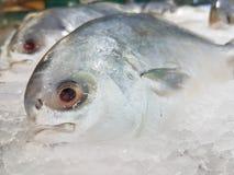 Grand poisson frais avec clairement l'oeil photos libres de droits