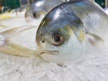Grand poisson frais avec clairement l'oeil photos stock