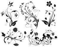 grand positionnement de fleur Image stock