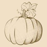 Grand potiron de style tiré par la main de vintage illustration libre de droits
