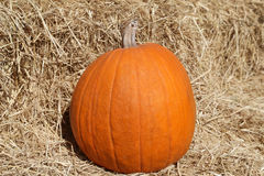 Grand potiron orange lumineux Photos stock