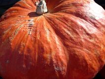 Grand potiron orange pour Halloween Photo stock