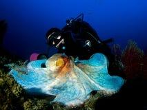 Grand poulpe Photos libres de droits