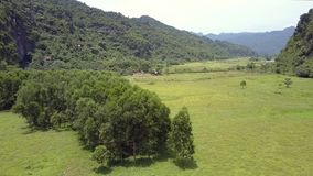Grand pré avec des arbres contre la vue aérienne de montagnes banque de vidéos