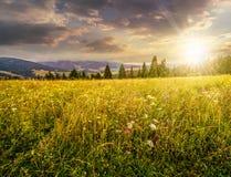 Grand pré avec les herbes, arbres dans le secteur de montagne au coucher du soleil Photos libres de droits
