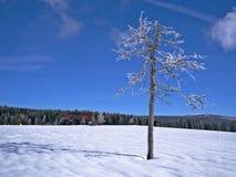 Grand pré de Jizera, montagnes de Jizera, Pologne Image libre de droits