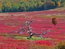Grand pré en automne, Shenandoah Photos stock