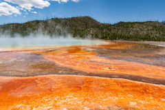 Grand Prismatic Hot Spring with steam rising. Steam rises from the Grand Prismatic Hot Springs in Yellowstone National Park. The vibrant colors of bacteria Royalty Free Stock Image