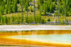 Grand Prismatic Spring and the forest of Yellowstone Park stock image