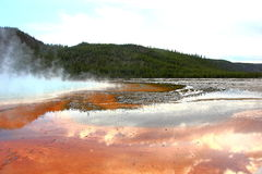Grand prismatic springs. Yellowstone National Park grand prismatic springs. Orange bacteria and steam in the photo. Hills in the back covered in trees. Cloudy Royalty Free Stock Photography
