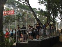 Grand Prix 2015, 18 θεατές της Σιγκαπούρης του Σεπτεμβρίου 2015 που βλέπουν τον κόλπο Σιγκαπούρη μαρινών περιοχής Στοκ Εικόνες