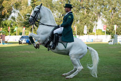 Grand Prix CSIO-W*** August 10, 2014 in Bratislava, Slovakia Stock Photos