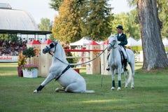 Grand Prix csio-w *** 10 Augustus, 2014 in Bratislava, Slowakije Stock Fotografie