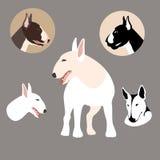 Grand réglé d'appartement de style d'illustration de vecteur de bull-terrier Image libre de droits