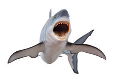Grand requin blanc féroce isloated sur le blanc Photo libre de droits