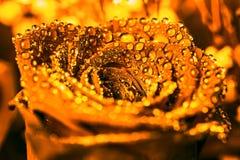 Grand or rose dans les baisses sur des pétales Images stock