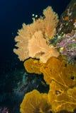 Grand Seafans images libres de droits