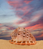 Grand seashell sur le sable images stock