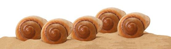 Grand seashell sur le sable images libres de droits