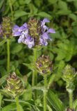 Grand Selfheal Photos stock