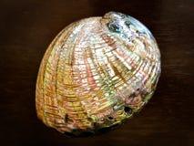 Grand Shell nacré sur une table en bois Photo stock