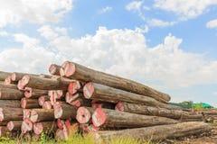 Grand stockage de bois de construction de Padauk yaed Image libre de droits