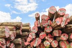 Grand stockage de bois de construction de Padauk yaed Photos libres de droits