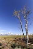 Grand Teton Stock Photography
