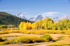 Grand Teton Autumn. Brilliant fall color along the Snake River in Wyoming stock images