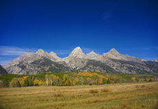 Grand Teton with autumn golden aspens Stock Photography