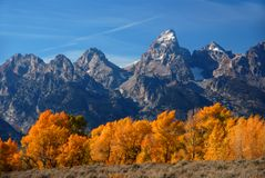 Grand Teton with autumn golden aspens Royalty Free Stock Image