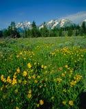 Grand Teton Stock Images