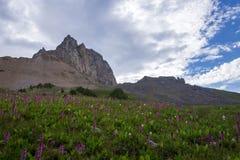 Grand Teton Hiking Trail Royalty Free Stock Image