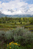Grand Teton Landscape with Yellow Flowers Stock Photography
