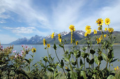 Grand Teton Massive. Jenny Lake and the Grand Teton Massive, Grand Teton National Park, USA Royalty Free Stock Photography