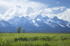 Grand Teton mountain range above grassy fields in Wyoming Royalty Free Stock Images
