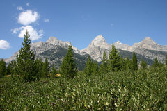Grand Teton Mountains. A view of the Grand Teton's from Taggart Lake Trail Stock Images