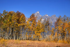 Grand Teton mountains Royalty Free Stock Image