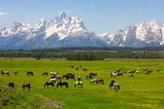 Grand Teton National Park Stock Images