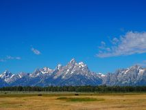 Grand Teton National Park Mountains with Bison Stock Image