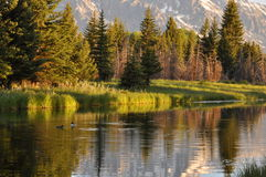 Grand Teton National Park at Sunrise Stock Image