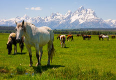 Grand Teton National Park, Wyoming Royalty Free Stock Photography