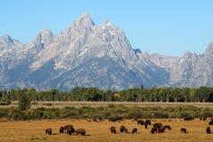 Grand Teton National Park, Wyoming, USA Royalty Free Stock Photography