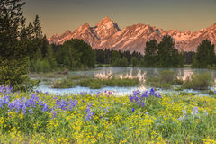 Grand Teton Peaks. The Grand Tetons Wyoming and with flowers in the foreground Stock Photos