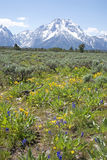 Grand Teton in summer Stock Photo