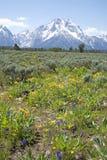 Grand Teton in summer stock photo